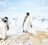 南極大陸・昭和基地開設記念日
