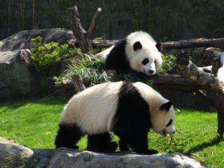 1972年10月28日は、「パンダの日」